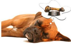 dog dreaming food