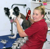 Pet Grooming at East Bundaberg Vet