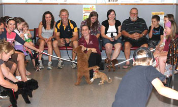 Puppy preschool at East Bundaberg Vet Hospital