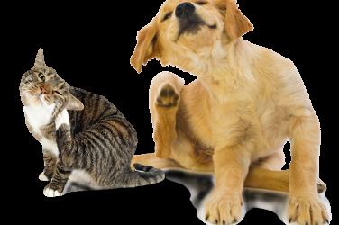 Cats and flea control
