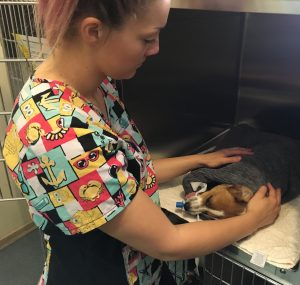 Nurse with a dog waking up from anaesthetic