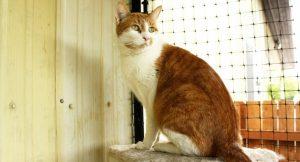 adopt-shelter-cat-june2