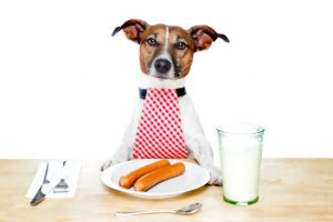 photodune-1746707-dog-at-table-xs