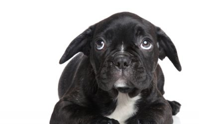 Noise or Storm Phobia? Does Your Dog Panic During Storms?