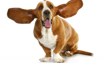 All Ear Problems Are Not Internal