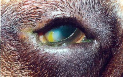 Inturned Eyelids