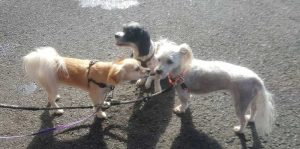 Dogs Socialise