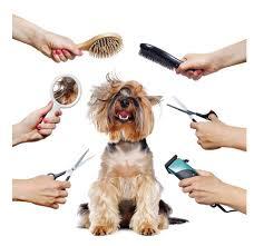 Dog trim