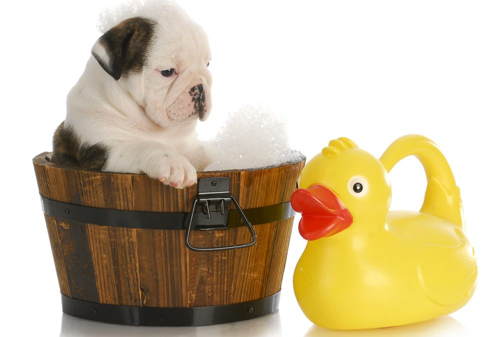 Bathing Your Animals in Winter